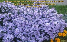 Inspirational Bible Verses with Flower Picture