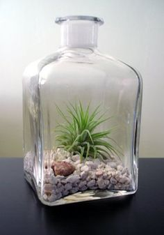 Repurpose glass containers as terrariums.