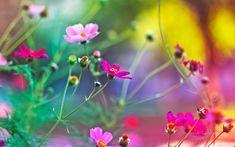 Bunte Blumen #desktop