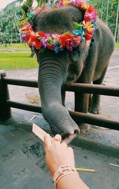 take me to these amazing & beautiful creatures 🐘💕🐘 Cute Creatures, Beautiful Creatures, Animals Beautiful, Cute Baby Animals, Animals And Pets, Funny Animals, Wild Animals, Animal Original, Elephant Afrique