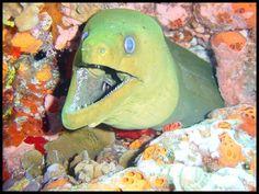 scuba diving pictures Cozumel