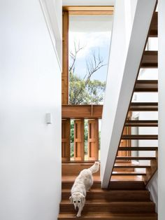 The focus on natural light and timber in this stairway creates a tranquil interior