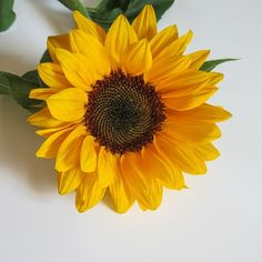 Flashback to some summer vibes in pre-Holiday December! The beautiful sunflower packs a pretty potent beauty punch, too. The oil of the Helianthus Annuus, aka sunflower, is high in essential fatty acis, which are fabulous for mature, sensitive or dry skin New Age, Dry Skin, Beauty Care, Summer Vibes, Punch, December, Oil, Cosmetics, Natural