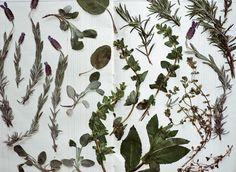 Kinfolk Herb-Drying