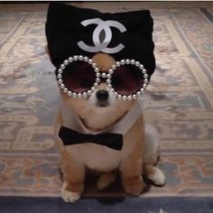 Dogs In Chanel | The Luxury Spot