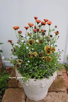 Thrilling About Container Gardening Ideas. Amazing All About Container Gardening Ideas. Beautiful Flowers, Plants, Flower Arrangements, Garden Nest, Foliage Plants, Container Flowers, Easy Garden, Container Gardening, Creative Garden Pots