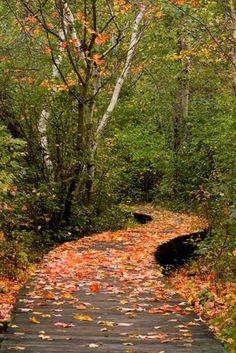 ESSEX HERITAGE_Parker River National Wildlife Refuge Boardwalk by Marion J Bayly by North of Boston, via Flickr