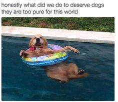 They are pure and innocent and everything good. | 22 Things You'll Just Get If You Love Animals More Than People:
