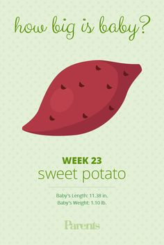 Your baby is as big as a sweet potato. His brain and hearing are more developed this week, and he's beginning to recognize your voice.