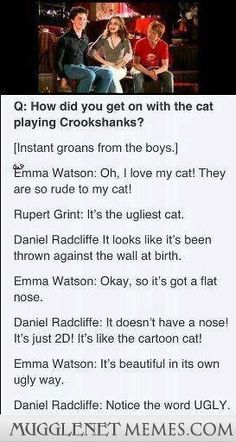 The Harry Potter cast on Crookshanks. I personally thought Crookshanks was adorable. Hogwarts, Slytherin, Harry Potter Jokes, Harry Potter Cast, Harry Potter Fandom, Harry Potter Interviews, Sassy Harry Potter, Harry Potter Theories, Harry Draco