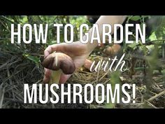 Gardening and Growing Mushrooms | How to Grow Mushrooms in your Annual or Permaculture Garden - YouTube Grow Your Own Mushrooms, Growing Mushrooms, Edible Mushrooms, Stuffed Mushrooms, Companion Gardening, Permaculture Garden, Vegetable Gardening, Tiny Farm, Farm Gardens