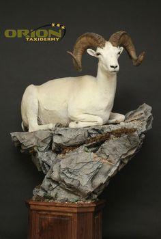 Walnut base, custom rock base Antelope Hunting, Taxidermy, Sheep, Goats, Witch, Base, Rock, Decor, Animales