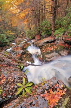 Autumn color and Shays Run, Blackwater Falls State Park, West Virginia