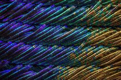 In this series of photographs featuring the delicate details of peacock feathers, photographer Waldo Nell relied on an Olympus BX 53 microscope to take hundreds of individual shots that were combined to create each image seen here. The process, called photo stacking, blends dozens or even hundre