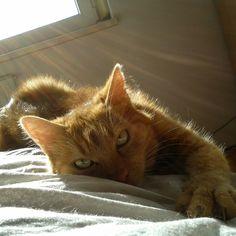 Katu Katze | Pawshake
