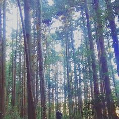 【ehhendaiou】さんのInstagramをピンしています。 《#nature #woods #forest #run #running #jog #jogging #training #workout #health #cleanair #winter #2016 #自然#森#林#ジョギング#山道#木漏れ日#健康#トレーニング#綺麗な空気#冬#природа #natur》