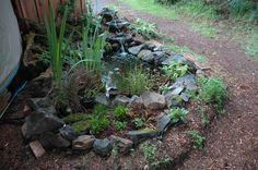 small pond...