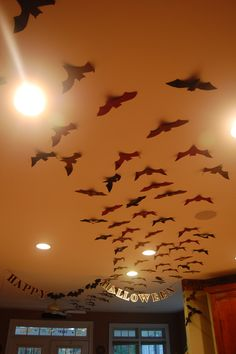 Bats for my 30th birthday/Halloween party last year. They looked like they swarmed from upstairs, through the kitchen, and out the back door.