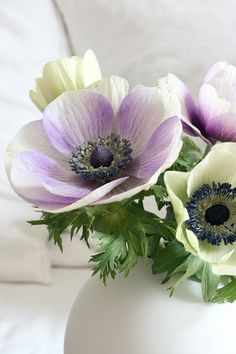 Anemonen | Nadine | Flickr