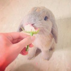 Cute Rabbit!
