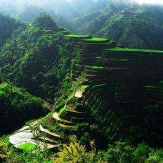 Rice Terrace Fields - Philippines