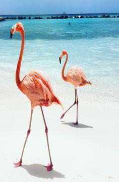 89cd429ce2a9 Flamingo Beach is located on the private island of the Renaissance Aruba  Resort & Casino hotel on Aruba in the Caribbean.