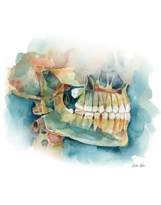 Roomy Dental Care The Dentist Dental Office Decor, Dental Office Design, Watercolor Print, Watercolor Paintings, Original Paintings, Watercolor Paper, Dentist Art, Dental Anatomy, Art Aquarelle