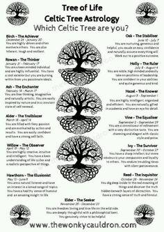 Which Celtic Tree are You? Which Celtic Tree are You?You can find Celtic tree and more on our website.Which Celtic Tree are You? Which Celtic Tree are You? Magick, Witchcraft, Celtic Symbols And Meanings, Gaelic Symbols, Druid Symbols, Mayan Symbols, Egyptian Symbols, Ancient Symbols, Symbols Of Life