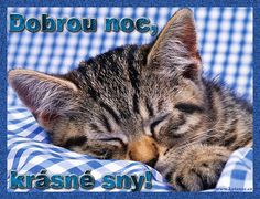 přání dobrou noc 007 animace Karel Gott, Good Night, Animals And Pets, Cats, Figurative, Pictures, Nighty Night, Pets, Gatos