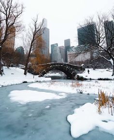 """What I Saw In NYC on Instagram: """"Photo by @flashing.lights  Central Park #manhattan #blizzard #blizzard2017  #ny#nyc #newyork #newyorker #newyorkcity#snowstorm #commute…"""""""