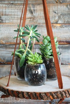 Hanging Wood Slice Plant Stand - brepurposed