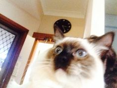 This is sushi his role model is grumpy cat as you can see he is trying to copy her !!!!!!!