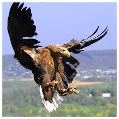 Las mejores fotos de aves en vuelo