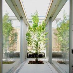 シンボルツリーと共に成長する家
