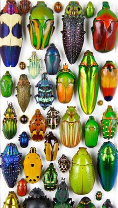 colorful beetles.