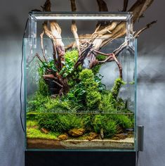 A simple Paludarium, made from any aquarium