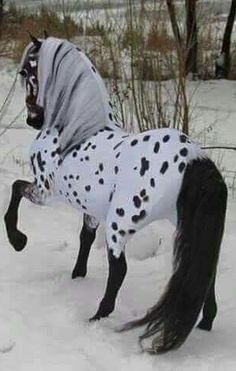 >>>Cheap Sale OFF! >>>Visit>> Appaloosa Frisian cross model I am thinking this is a model horse right? Beautiful Horse Pictures, Most Beautiful Horses, All The Pretty Horses, Animals Beautiful, Cute Horse Pictures, Horse Photos, Stunningly Beautiful, Absolutely Stunning, Animal Pictures