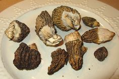 Cannundrums: Morel Mushrooms