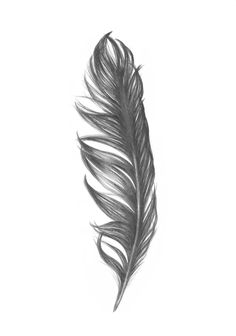 feather tattoo, very soon Feather Drawing, Feather Tattoo Design, Feather Art, Feather Tattoo Cover Up, Head Tattoos, Sleeve Tattoos, Cool Tattoos, Tattoo Dotwork, Indian Feathers