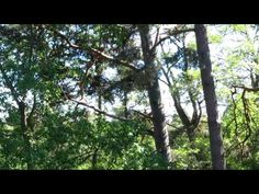 A short film by Toby King showing the extraordinary beauty of one of Australia's finest subtropical gardens. Surrounding the Crystal Castle near Mullumbimby,. Sounds Of Birds, Crystal Castle, Anna Karenina, A Thousand Years, Peru Travel, Travel Videos, Universal Pictures, Short Film, Light In The Dark