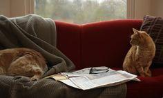 7 cosas que los gatos y los perros tienen en comun 5