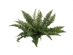 1 Artificial Silk 20' Boston Fern -- Be sure to check out this awesome product.