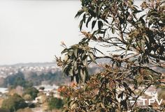 Shot on Fujicolor Superia Xtra 400. Nikon F-601