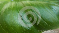 Ants working on green leaf.