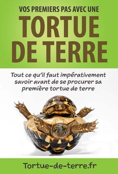 Your big tortoise is a source of pleasure to you. You bought the turtle so you can have more fun with family members and friends. But you need to take care Fish Tank Terrarium, Water Terrarium, Gecko Terrarium, Mason Jar Terrarium, Bottle Terrarium, Terrarium Centerpiece, Terrarium Diy, Centerpiece Wedding, Terrarium For Sale