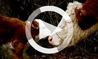 Vegan - Informationen über die gesündeste Ernährung