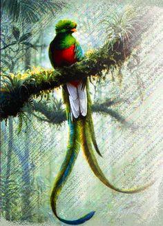 paisajes con quetzales - Buscar con Google