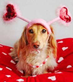 Valentine Dog | pretty-valentine-dog