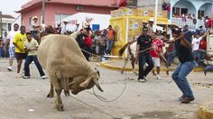 Stop Force-Feeding Alcohol, Torturing and Killing Bulls at Festival