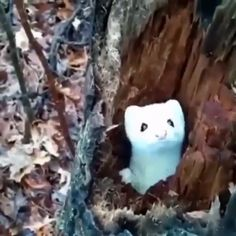 Gorgeous white mink checking out a hiker from their tree stump ? Gorgeous white mink checking out a hiker from their tree stump ? Funny Animal Videos, Cute Funny Animals, Animal Memes, Cute Baby Animals, Funny Cute, Cute Creatures, Beautiful Creatures, Animals Beautiful, Nature Animals